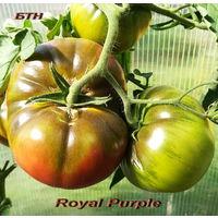 Семена томата Royal Purple