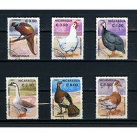 Никарагуа 1985г. домашние птицы. 6м.