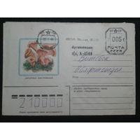 1985 лисички прошло почту