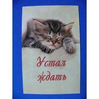 """Календарик, 2006, """"Устал ждать"""" (котёнок спящий)."""