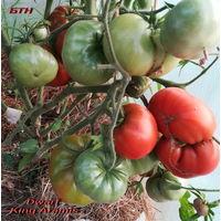 Семена томата Dwarf King Aramis