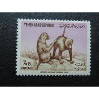 Йемен.  Фауна.