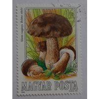 Венгрия.1984.грибы