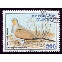 1 марка 1995 год Таджикистан Птичка 80