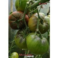 Семена томата Morado