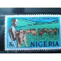 Нигерия 1973 Стандарт 5 кобо стадо