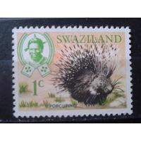 Свазиланд 1969 Дикобраз**