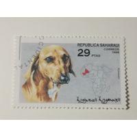 Сахара 1998. Собаки
