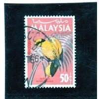 Малайзия. Ми-21. Черноногая иголка (Oriolus chinensis).1965.