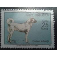 Турция 1973 собака