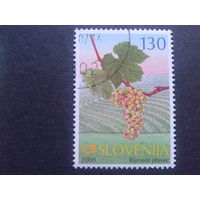 Словения 2000 виноград