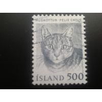 Исландия 1982 кошка