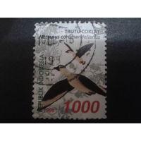 Индонезия 1998 птицы