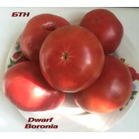 Семена томата Dwarf Boronia