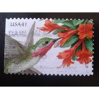 США 2007 колибри
