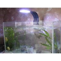Аквариум на 25л с рыбами килли и светильником