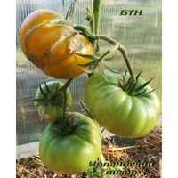 Семена томата Ирландский Ликер