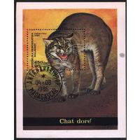 Кошки. Мадагаскар 1986. Дикая кошка. Блок. Гаш.
