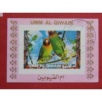 Кувейт. Птицы.