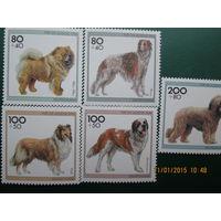 Собаки комплект 1996 г