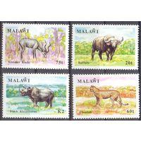 Малави фауна