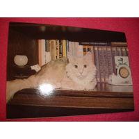 Открытка Кот книголюб