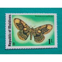 Мальдивы. Бабочки.