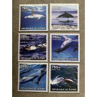 Гвинея 2002. Дельфины