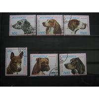 Марки - Мозамбик фауна собаки 1979