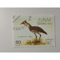 Сахара 1991. Дикие птицы
