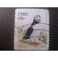 Ирландия 2004 птицы