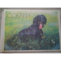Набор спичек. Собаки. СССР.