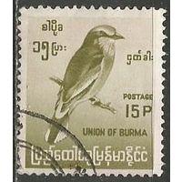 Бирма. Бенгальская сизоворонка. 1964г. Mi#182.