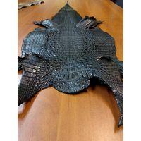 Шкура крокодила. Кожа крокодила галантерейная, спина, черного цвета.