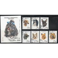 Собаки Мадагаскар 1991 год серия из 1 блока и 7 марок