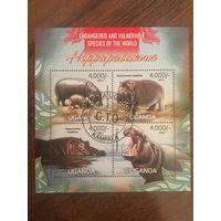 Уганда 2013. Бегемоты (блок)