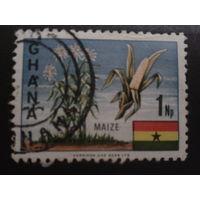 Гана 1967  маис, флаг