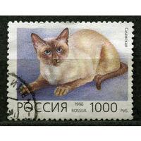 Сиамская кошка. Россия. 1996