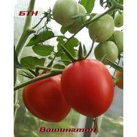 Семена томата Вашингтон
