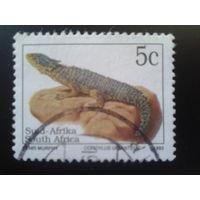 ЮАР 1993 ящерица