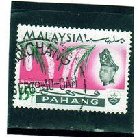Малайзия. Паханг. Ми-81. Ринхостилис ретуза.1965.