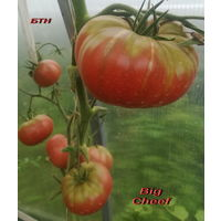 Семена томата Big Cheef