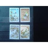 Лесото 1978 Насекомые** Полная серия