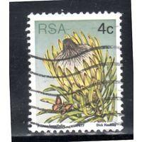 ЮАР. Mi:ZA 515. Длиннолистовой sugarbush (Protea longifolia). 1977.