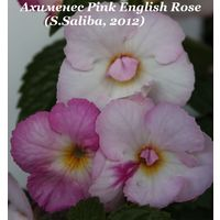 Ахименес Pink English Rose (S.Saliba, 2012)