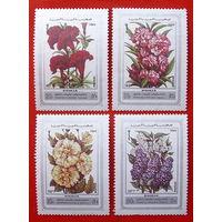 Сирия. Цветы. ( 4 марки ) 1977 года.