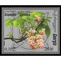 2016 Грузия 689 Флора. цветы  Колхидская клекачка**