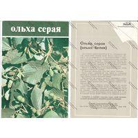 Буклет главкоопинформрекламы - ольха серая ,1984 г.