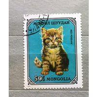 Монголия.1976г. Кот.