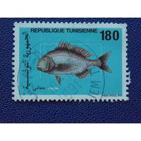 Тунис 1991г. Морская фауна.